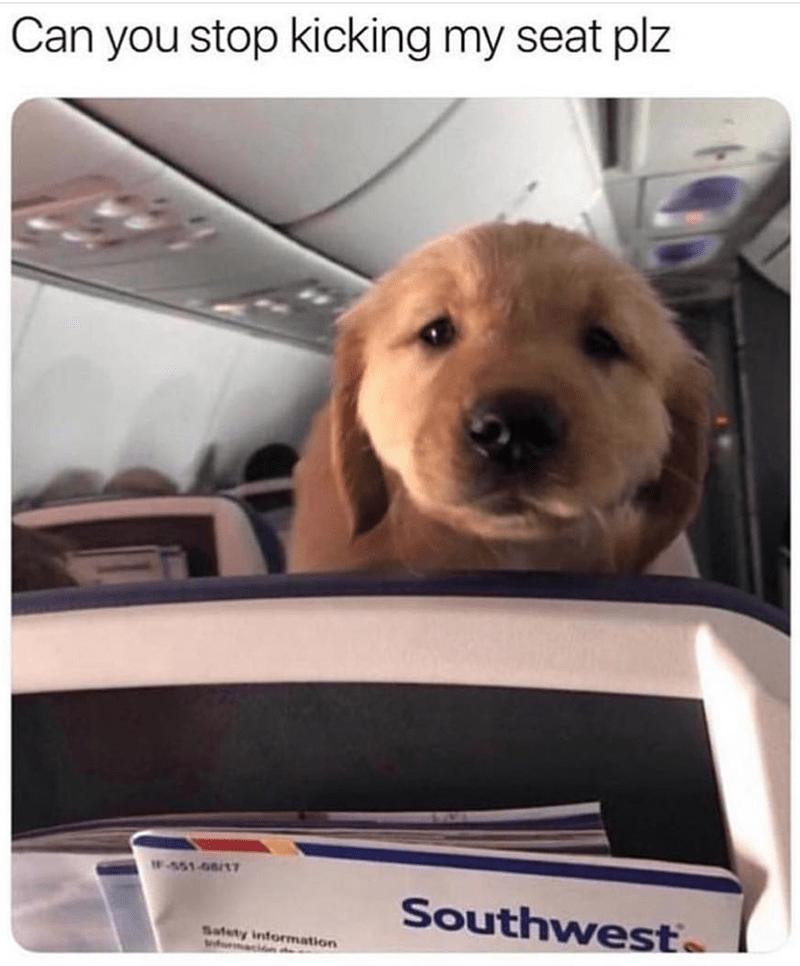 Dog - Can you stop kicking my seat plz F-551 08/1T Southwest Safety information macin