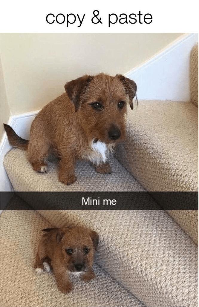 Dog - copy & paste Mini me