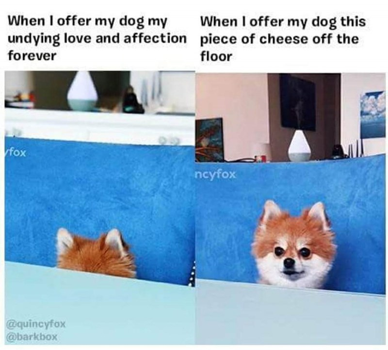 Canidae - When I offer my dog my undying love and affection piece of cheese off the forever When I offer my dog this floor fox ncyfox @quincyfox @barkbox
