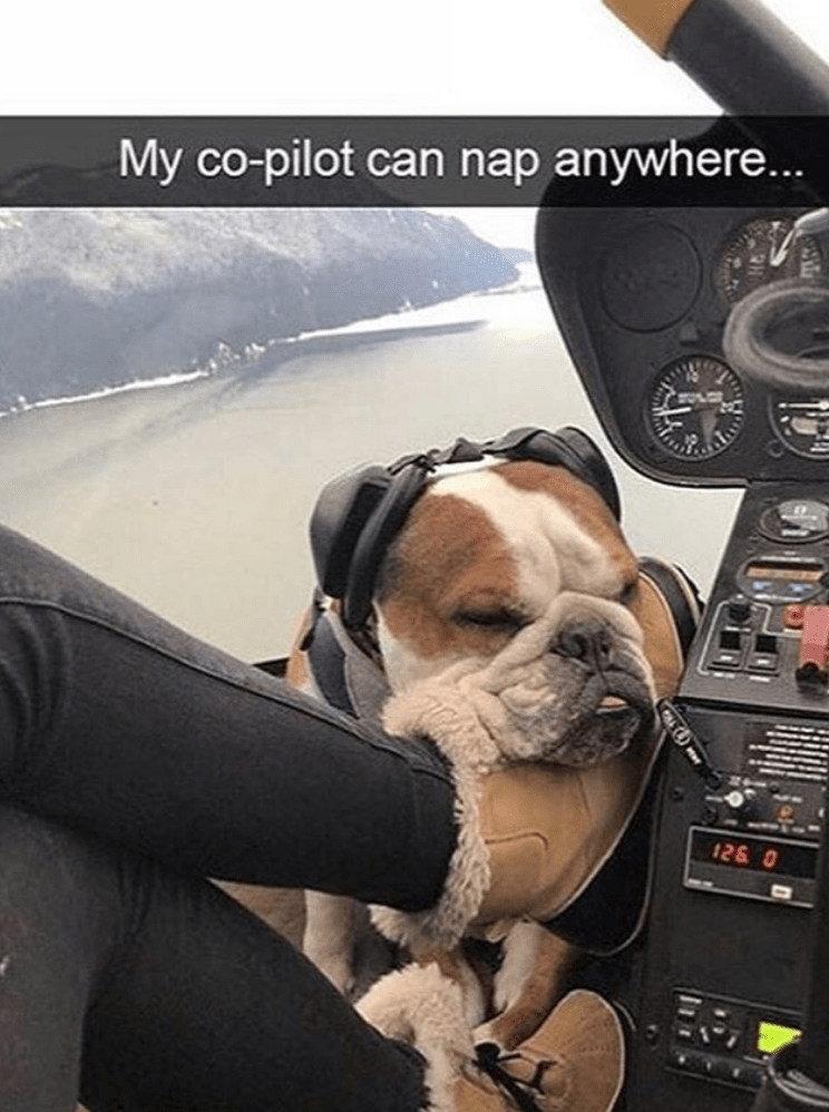 Dog - My co-pilot can nap anywhere... 126 0