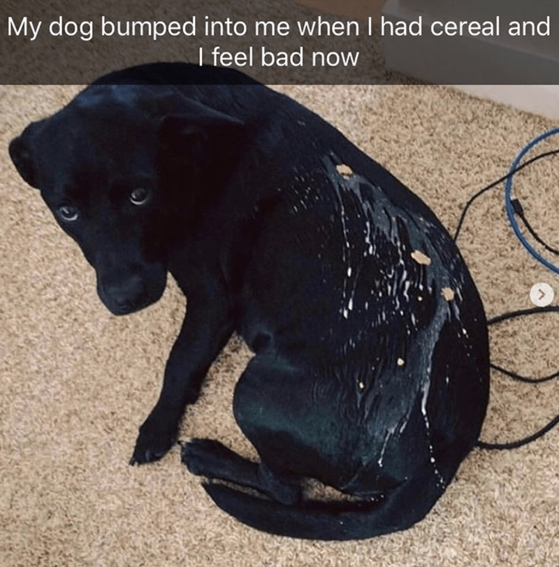 Canidae - My dog bumped into me when I had cereal and I feel bad now