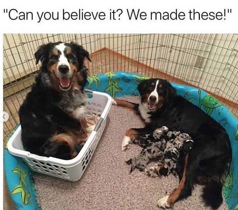 """Dog - """"Can you believe it? We made these!"""""""