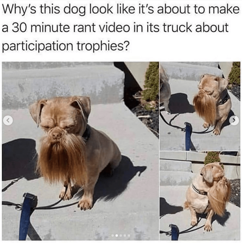 Dog - Why's this dog look like it's about to make a 30 minute rant video in its truck about participation trophies?