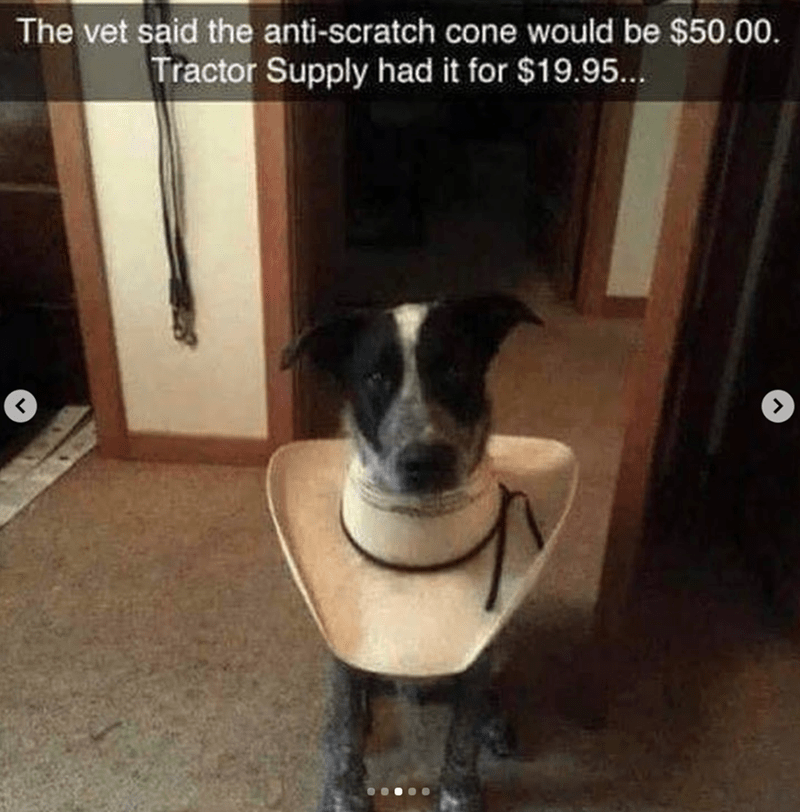 Dog breed - The vet said the anti-scratch cone would be $50.00. Tractor Supply had it for $19.95...