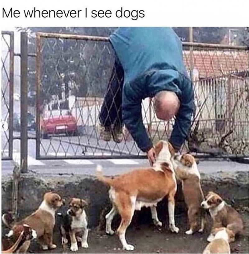 Dog - Me whenever I see dogs