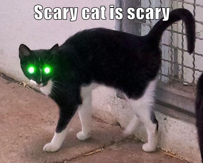 caturday meme of a cat that has eyes that are neon green