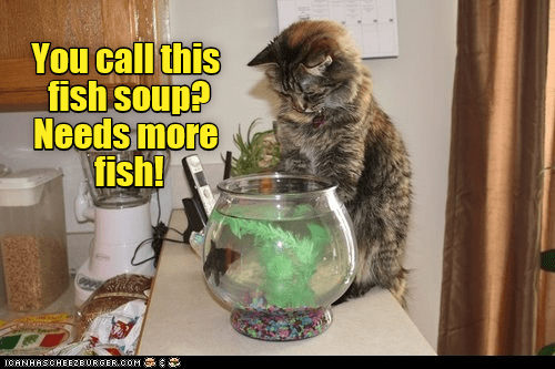cute cat meme staring at a fish bowl