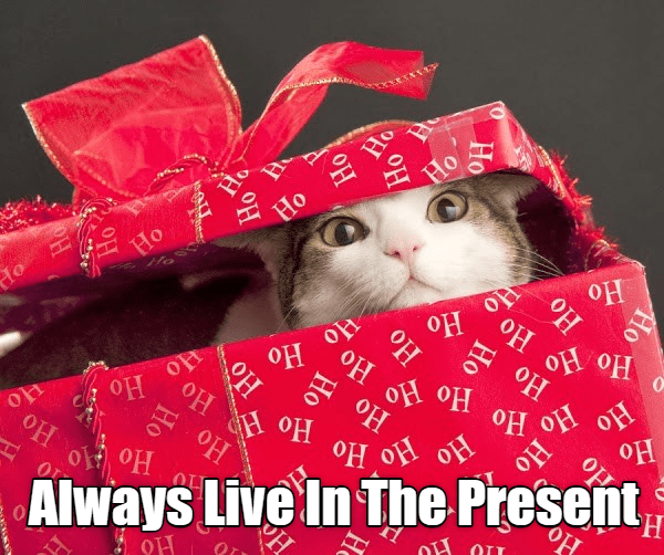 caturday meme of a cat coming out of a gift wrapped box