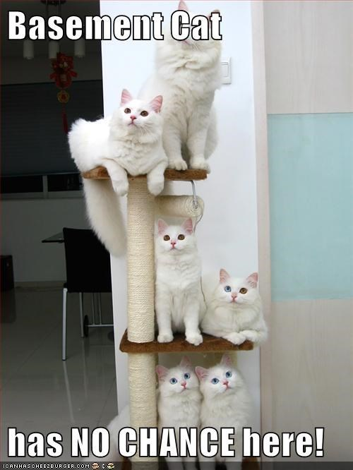 cute cats that all look the same sitting on a cat tower together