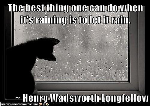 cute cat staring at a window while it rains