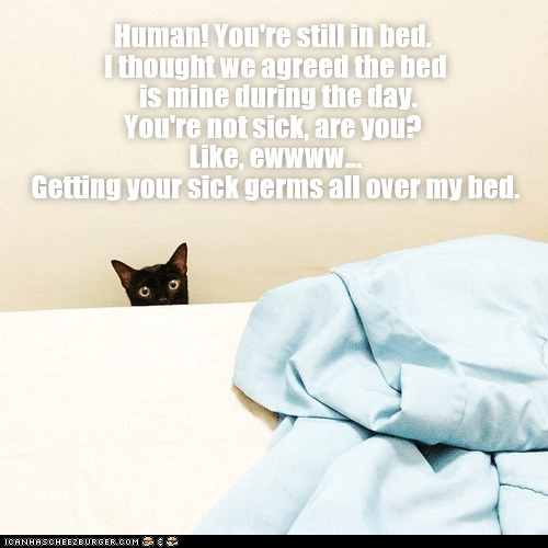 cute cat meme of a cat staring up at a bed with a sad expression