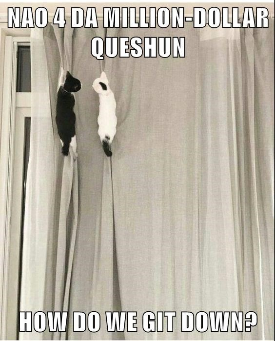 cute cats climbing up a set of curtains together
