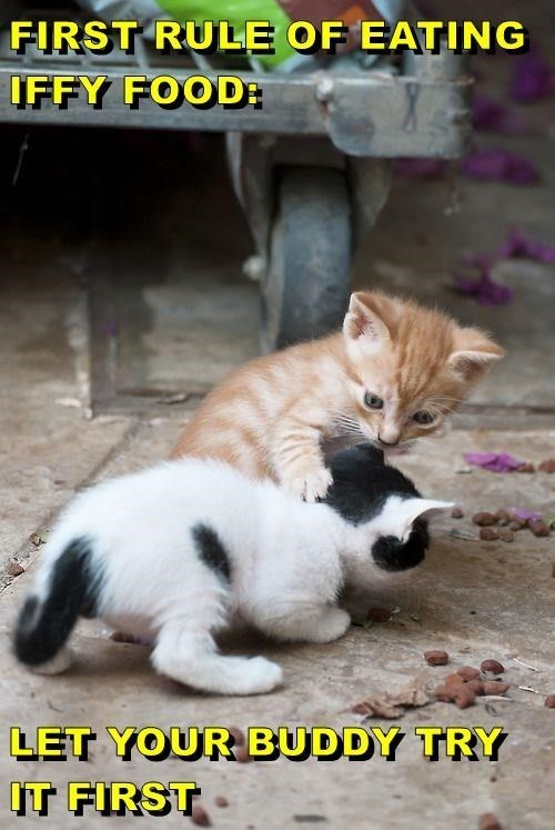 cute cats meme of a kitten putting its paw around another kitten