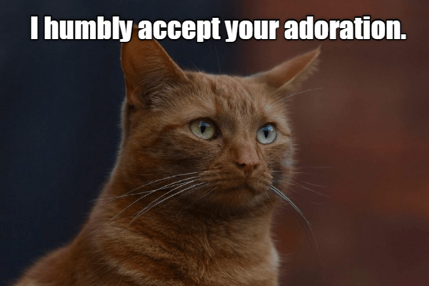 cute cat meme of a cat accepting being adored by people