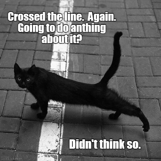 caturday meme of a cat stretching on the sidewalk