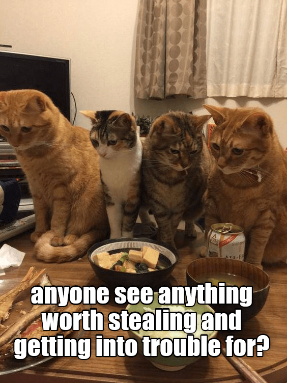 cute cats staring at the food on the dinner table
