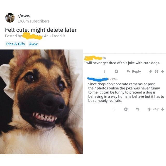 German shepherd dog - r/aww 19,0m subscribers Felt cute, might delete later Posted by 4h i.redd.it Pics & Gifs Aww 2h I will never get tired of this joke with cute dogs. Reply 53 .27m Since dogs don't operate cameras or post their photos online the joke was never funny to me. It can be funny to pretend a dog is behaving in a way humans behave but it has to be remotely realistic. -47