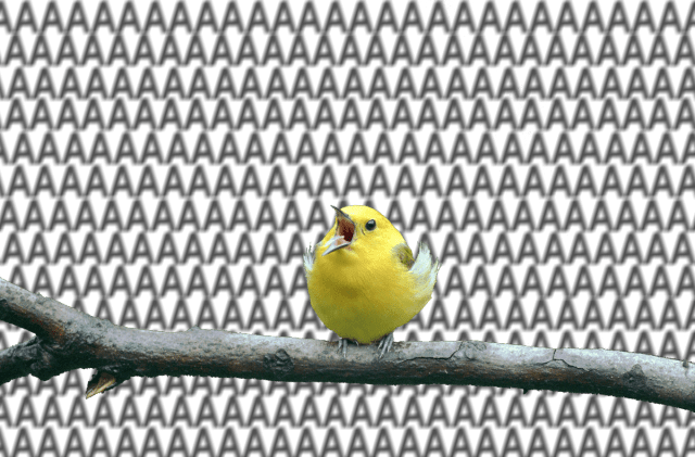 """Pic of bird with it's beak open and background filled with """"aaa""""s to suggest that it's screaming"""
