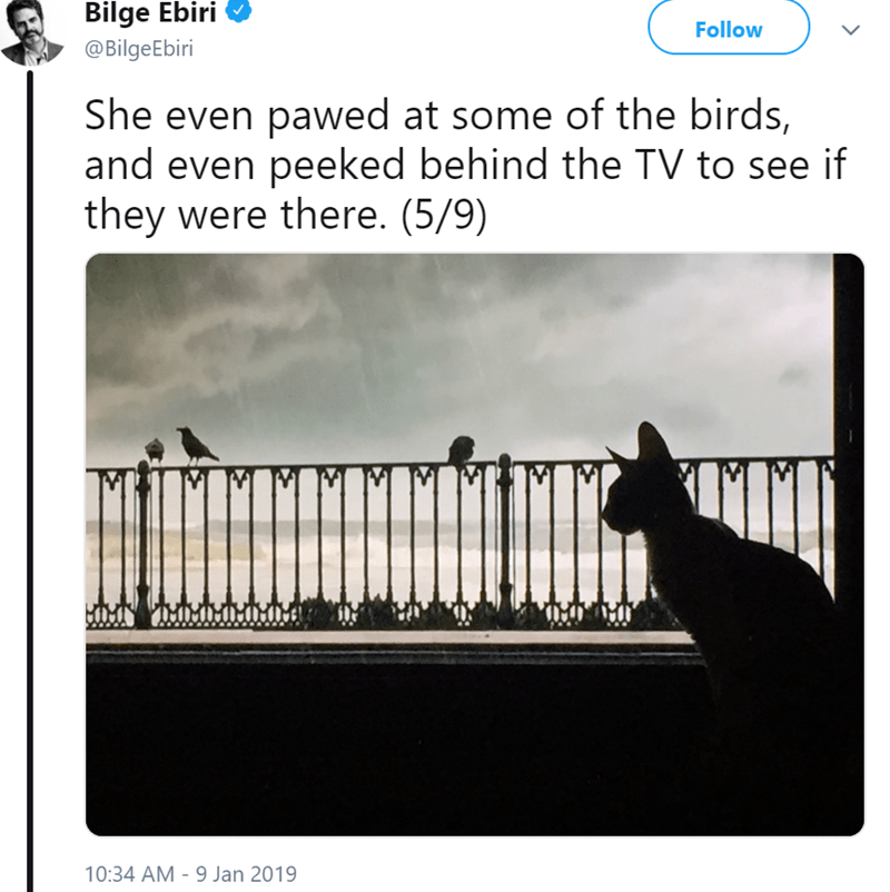 Text - Bilge Ebiri @Bilge Ebiri Follow She even pawed at some of the birds, and even peeked behind the TV to see if they were there. (5/9) 10:34 AM 9 Jan 2019