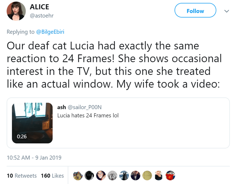 Text - ALICE Follow @astoehr Replying to @BilgeEbiri Our deaf cat Lucia had exactly the same reaction to 24 Frames! She shows occasional interest in the TV, but this one she treated like an actual window. My wife took a video: ash @sailor_P0ON Lucia hates 24 Frames lol 0:26 10:52 AM - 9 Jan 2019 10 Retweets 160 Likes