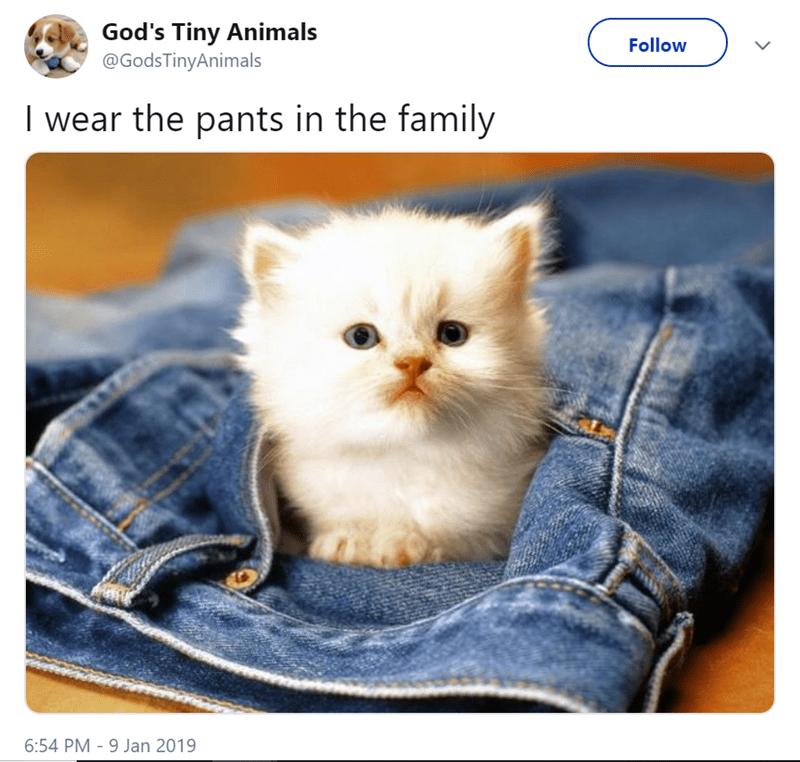 Cat - God's Tiny Animals @GodsTinyAnimals Follow I wear the pants in the family 6:54 PM 9 Jan 2019