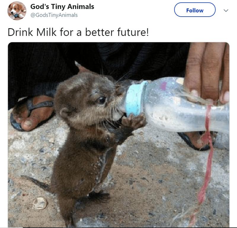 Wildlife - God's Tiny Animals @GodsTinyAnimals Follow Drink Milk for a better future!