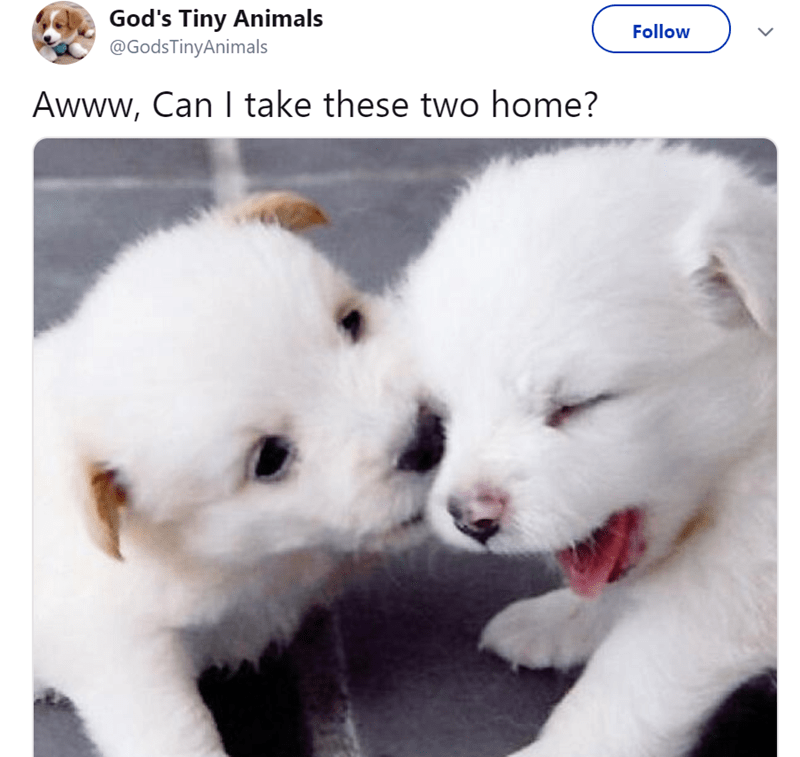Vertebrate - God's Tiny Animals @GodsTinyAnimals Follow Awww, Can I take these two home?