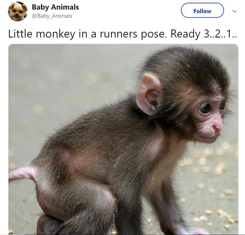 Vertebrate - Baby Animals @Baby_Animals Follow Little monkey in a runners pose. Ready 3..2.1..