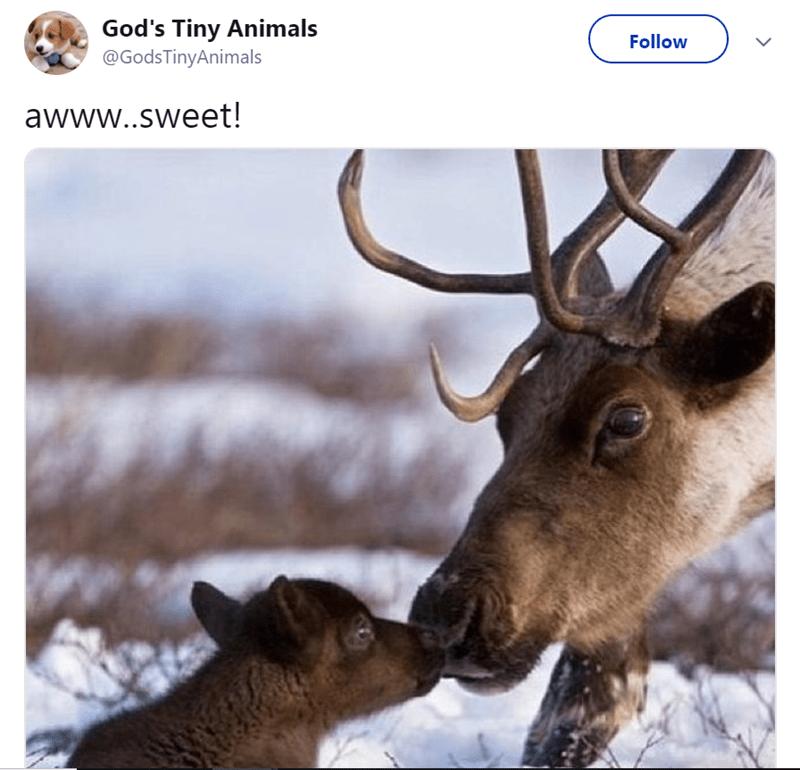 Wildlife - God's Tiny Animals @GodsTinyAnimals Follow awww..sweet!
