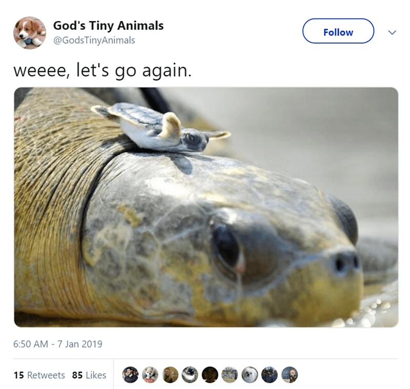 Wildlife - God's Tiny Animals @GodsTinyAnimals Follow weeee, let's go again. 6:50 AM -7 Jan 2019 15 Retweets 85 Likes