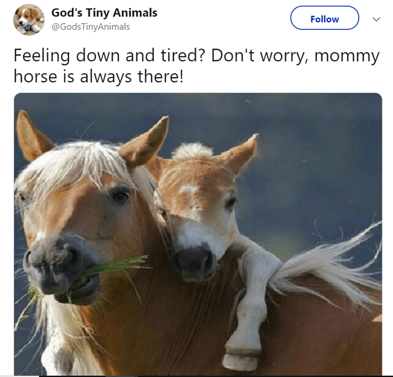 Vertebrate - God's Tiny Animals @GodsTinyAnimals Follow Feeling down and tired? Don't worry, mommy horse is always there!