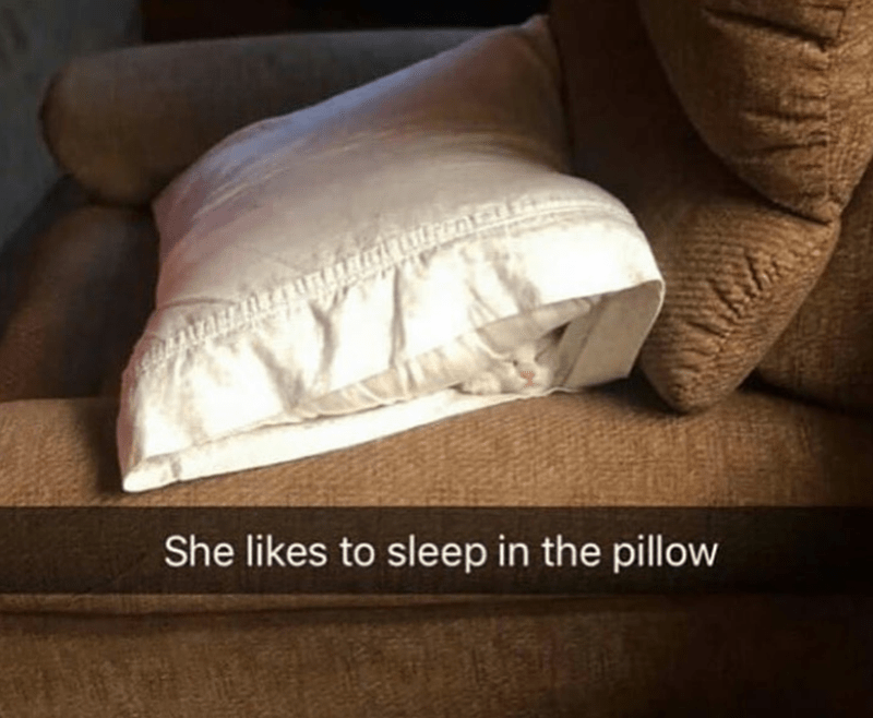 Caturday meme of a cat sleeping inside a pillowcase