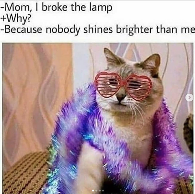 Caturday meme about a jealous glamorous cat