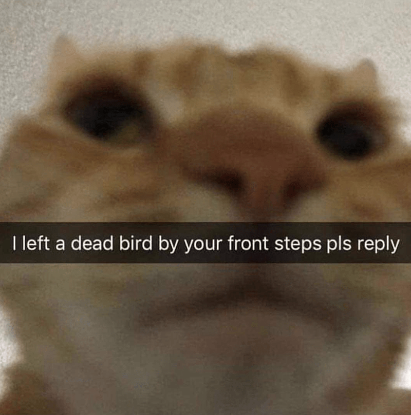 Caturday meme of a snapchat from a cat asking you to reply