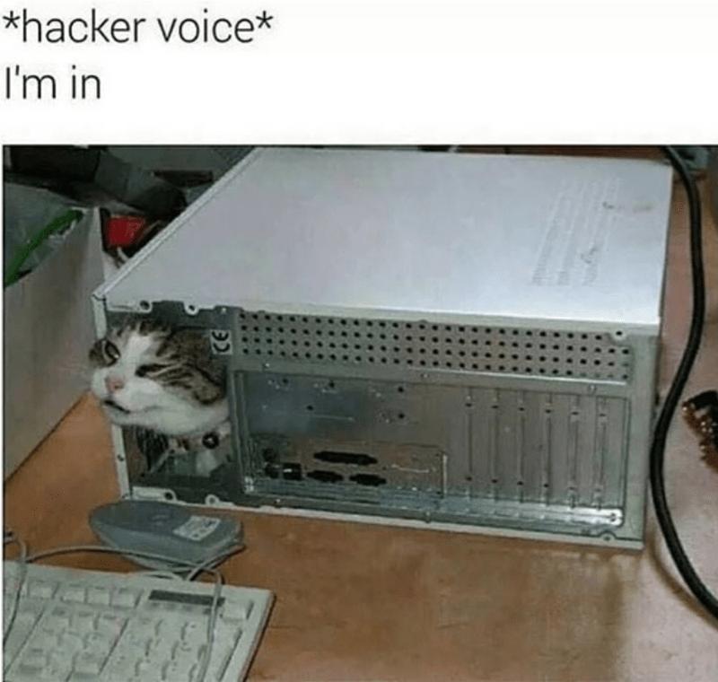 Caturday meme of a cat inside a computer
