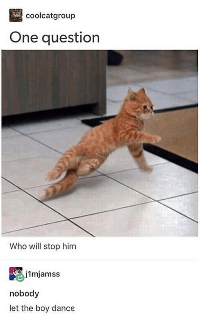 Caturday meme of a kitten breakdancing