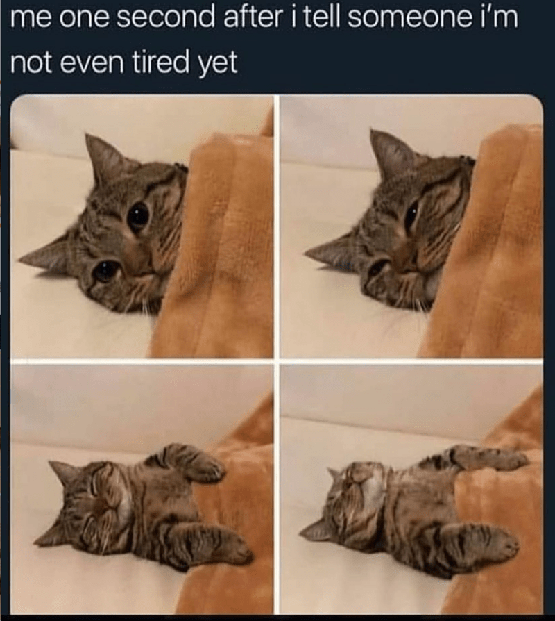 Caturday meme about falling asleep after claiming to not be tired