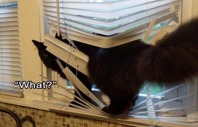 Caturday meme of a cat tangled in window blinds