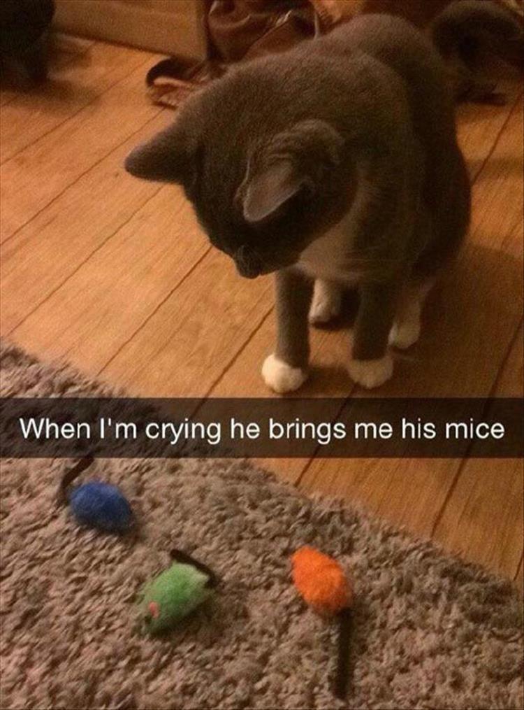 Caturday meme of a cat bringing his sad owner his toys