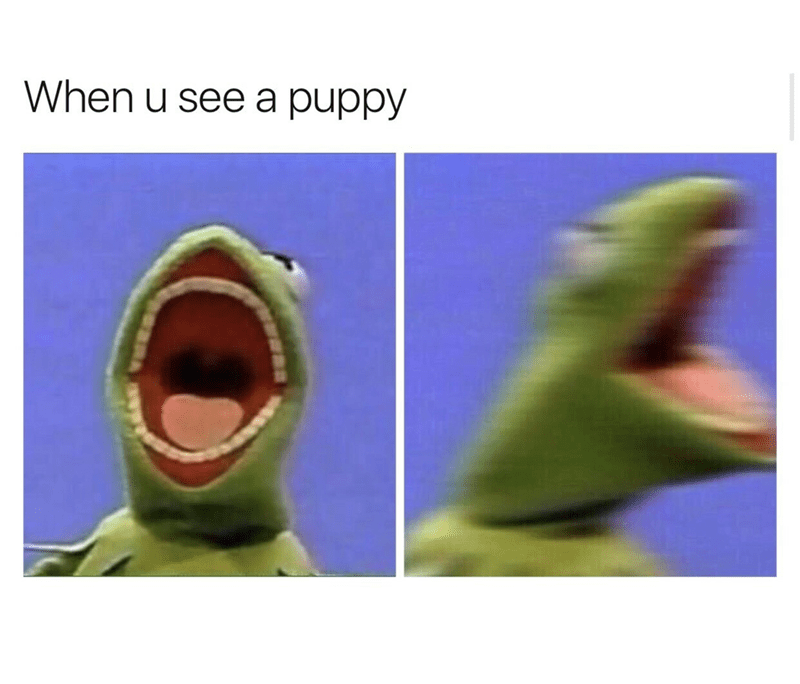 "Caption that reads, ""When u see a puppy"" above pics of Kermit the Frog screaming"""