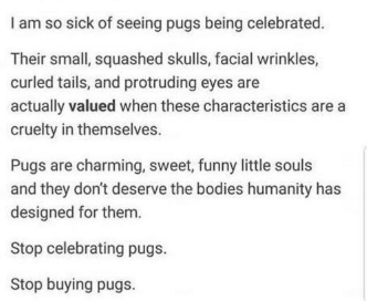 Text - I am so sick of seeing pugs being celebrated. Their small, squashed skulls, facial wrinkles, curled tails, and protruding eyes are actually valued when these characteristics are a cruelty in themselves. Pugs are charming, sweet, funny little souls and they don't deserve the bodies humanity has designed for them. Stop celebrating pugs Stop buying pugs