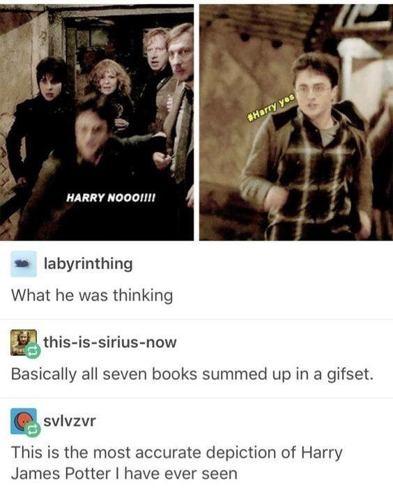 Text - Harry yes HARRY NOOO!!! labyrinthing What he was thinking this-is-sirius-now Basically all seven books summed up in a gifset. svlvzvr This is the most accurate depiction of Harry James Potter I have ever seen