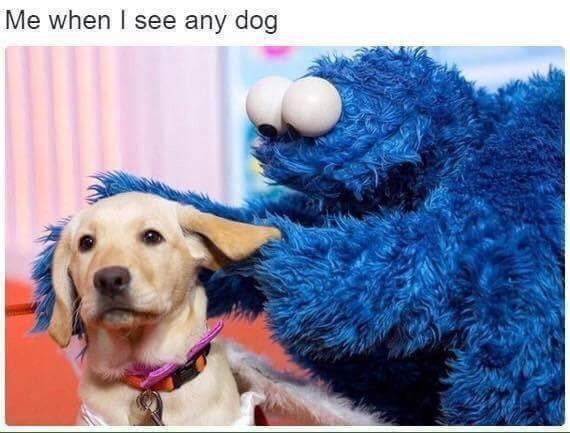 wholesome meme of cookie monster petting a dog and comparing it to humans when they see their dog