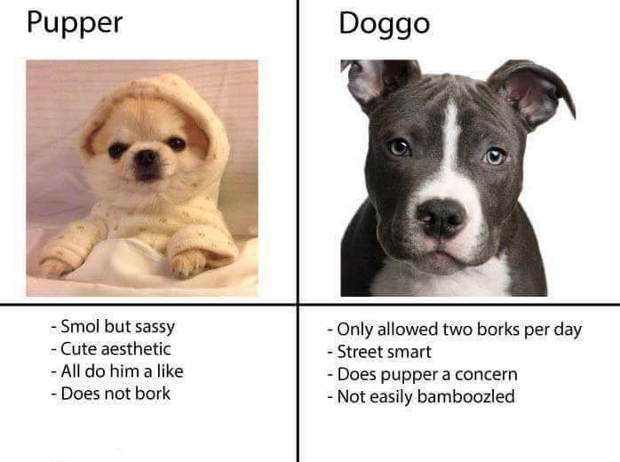 wholesome meme of the differences between a pupper and a doggo