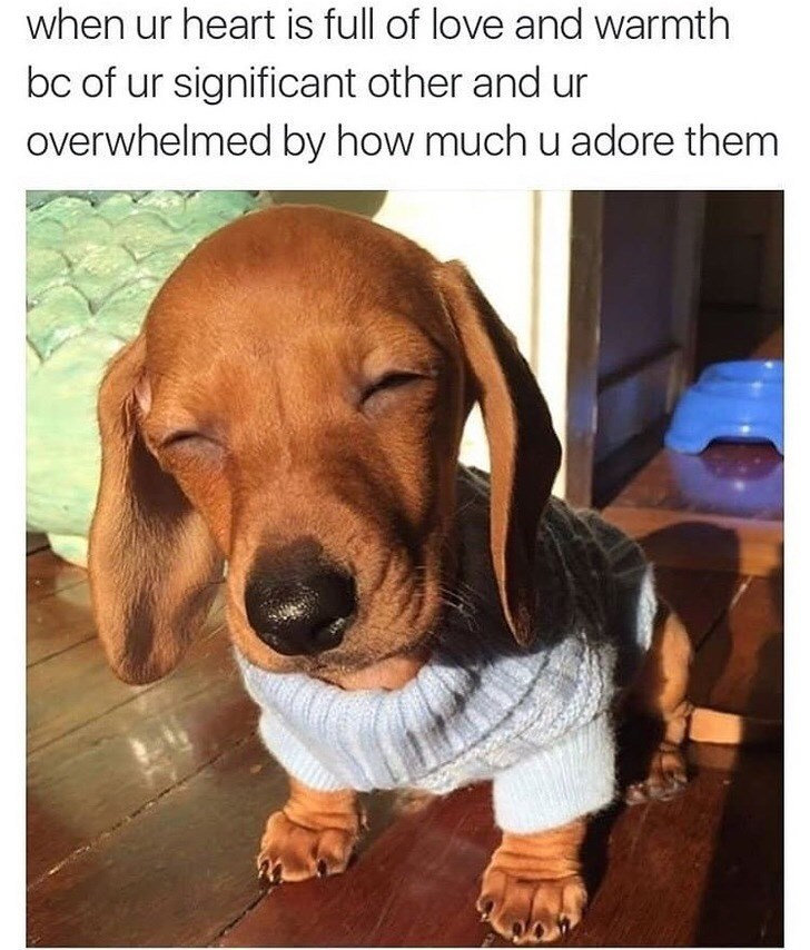 wholesome meme of a puppy squinting its eyes in the sun and wearing a sweater