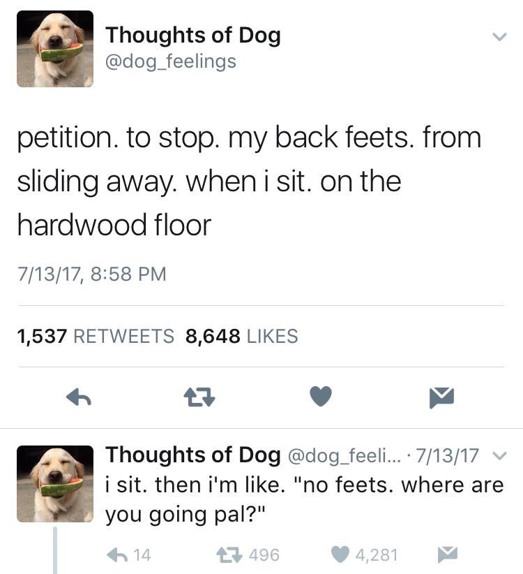 "Text - Thoughts of Dog @dog_feelings petition. to stop. my back feets. from sliding away. when i sit. on the hardwood floor 7/13/17, 8:58 PM 1,537 RETWEETS 8,648 LIKES Thoughts of Dog @dog_feel... 7/13/17 i sit. then i'm like. ""no feets. where you going pal?"" t규 496 14 4,281"
