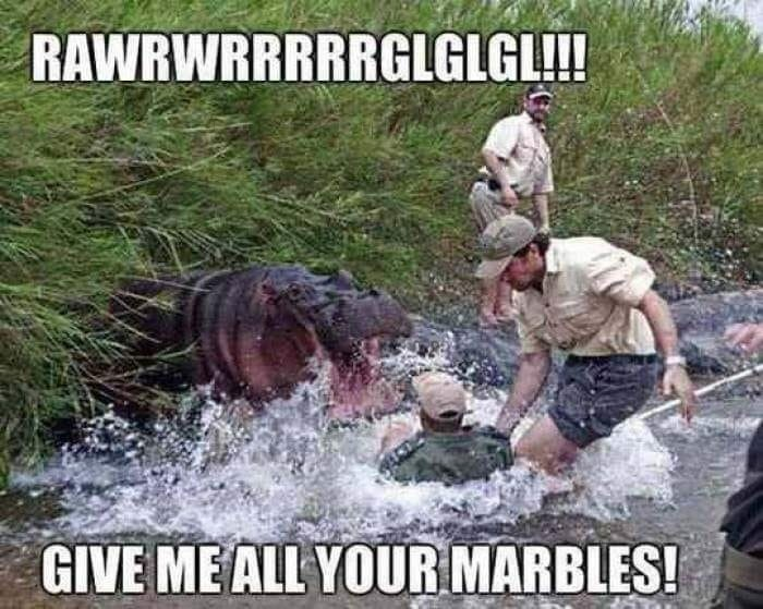 """pic of a real life """"hungry hippos"""" game with a hippo jumping from the bushes and demanding marbles"""