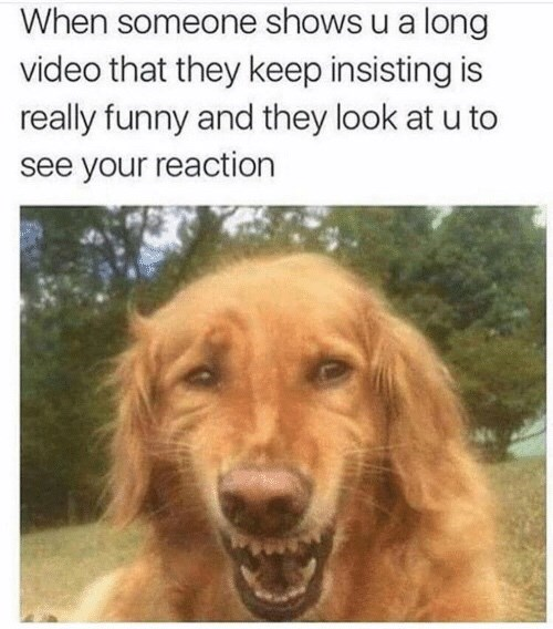 meme about pretending to find something your friend showed you funny with pic of dog laughing uncomfortably