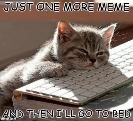 meme about looking at memes instead of sleeping with pic of sleepy kitten laying on a keyboard