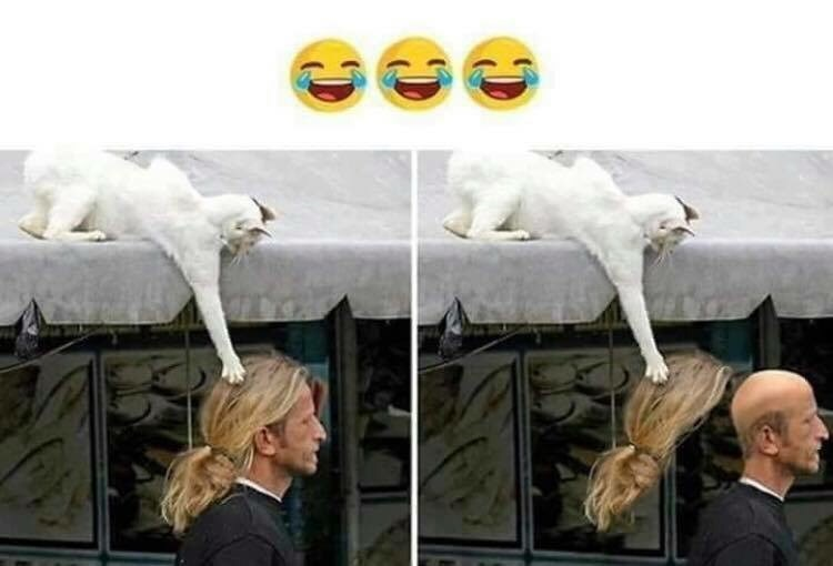 photoshopped pics of a white cat sitting on a roof and snatching a passing man's wig off